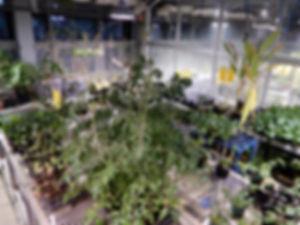 小金井キャンパス東館5階にある温室|法政大学新聞1048