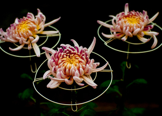 flors2.jpg