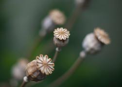 flors4.jpg