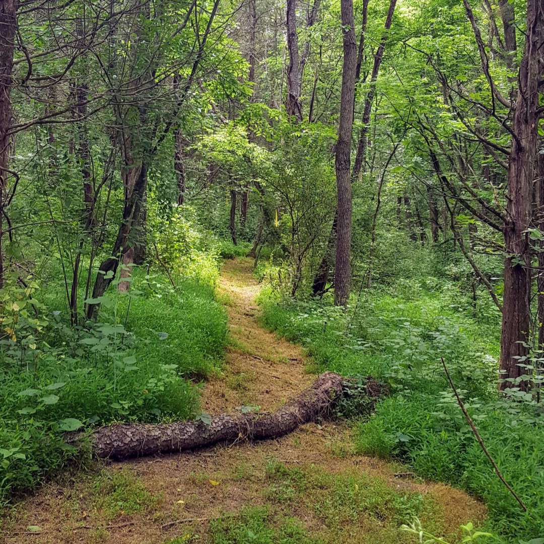 The trails thru our woods_