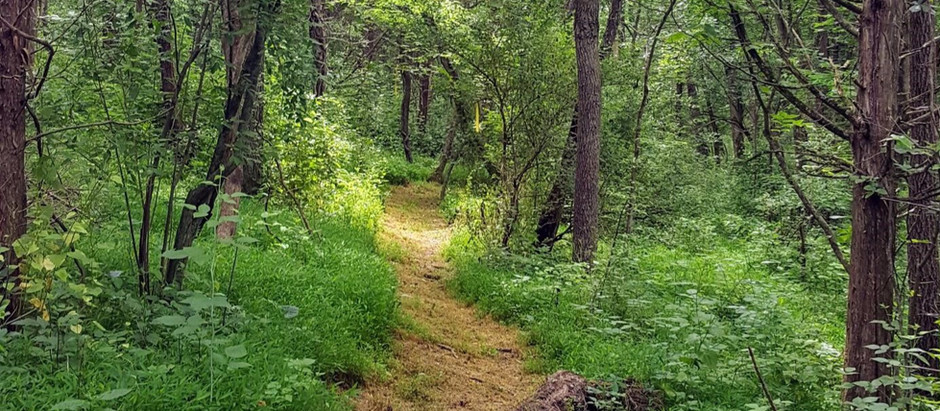Forest Bathing: How Nature Heals Our Mind, Body and Soul