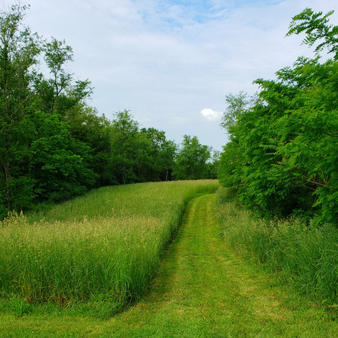 Our Meadowland Trail