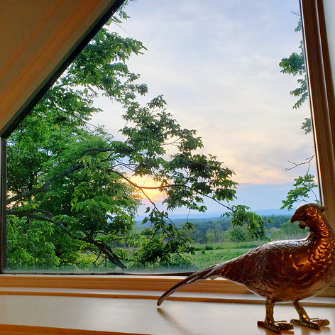 Beautiful views from the Bird Room.