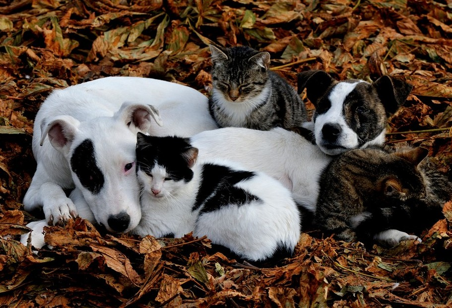 Dogs and cats leaves