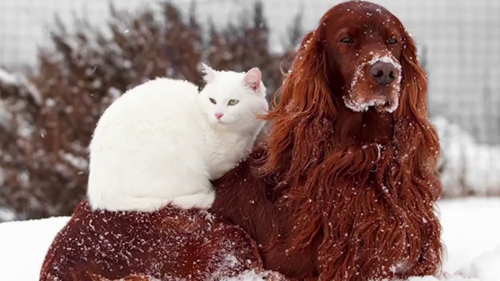 dog-and-cat-in-snow-1024x576
