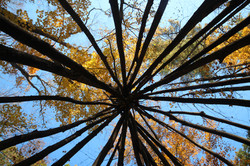Building Social-Ecological Networks