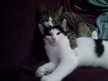 Whiskers and Willow kittens.jpg