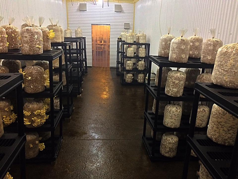 fruiting room