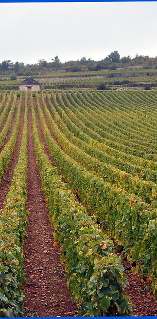 Introducción al Mundo del Vino para 2 personas