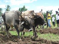Sustainable Development in Haiti