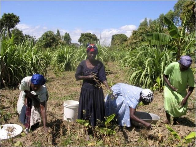 Women working on their crops