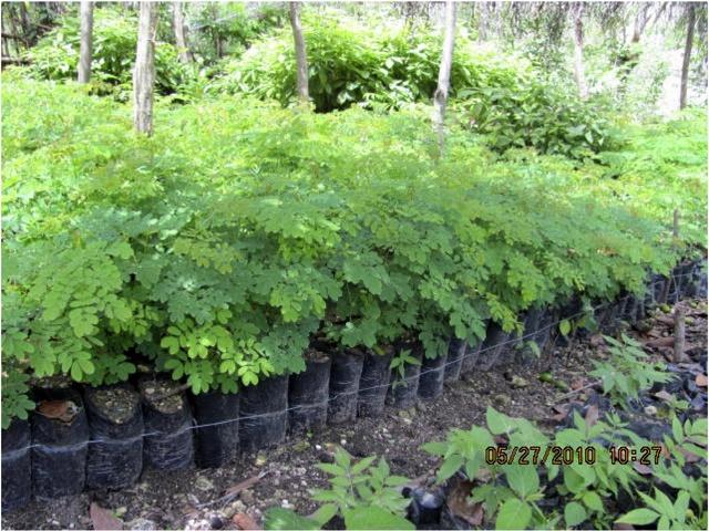 Member's Plant Seedlings