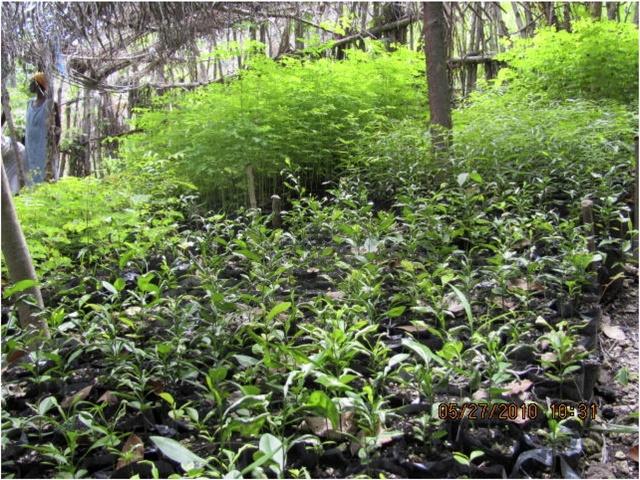 Flourishing Tree Nursery