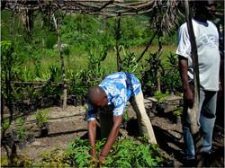 OPB Member Tends to Seedlings