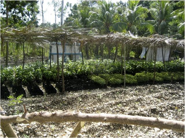 Members of ODEPERIB grow seedlings