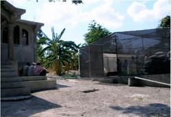 Center for Plantain Propagations