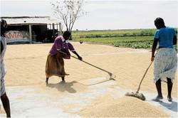 Sweeping Grains