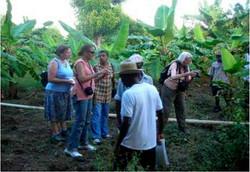 Delegates Examine Larger Plantains