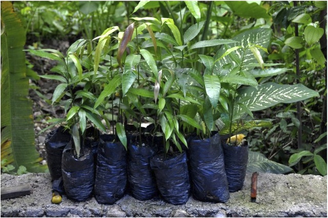 Tree Seedlings Ready for Planting
