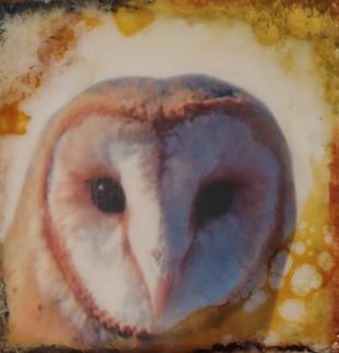 TerriLockwood_AudobonRaptors_Owl.jpg