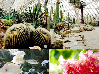 Национальный институт экологии «Ecorium»