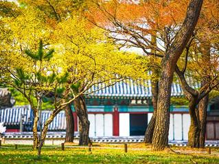 Цветение весенних цветов во дворце Чхангёнгун