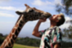 Gregory Appleby, Giraffe, Maui, Hawaii,