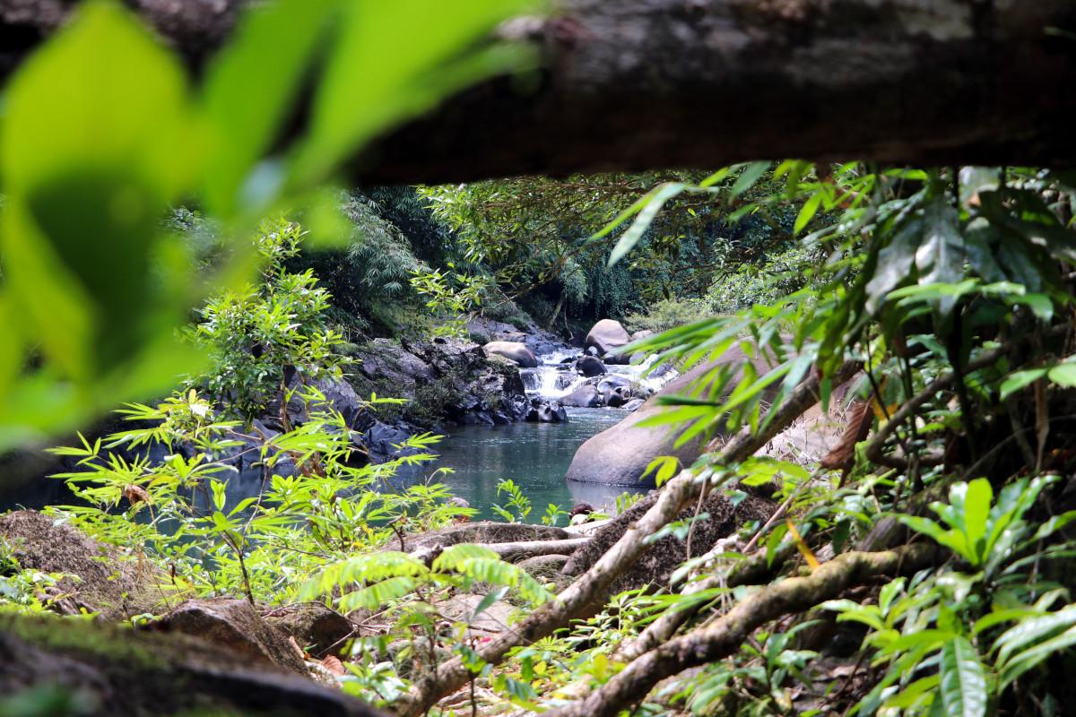jungle-walk-bamboo-cooking-waterfall.JPG