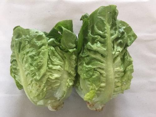 New Forest Little Gem's Lettuce (2 pack)