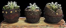 3plants.png