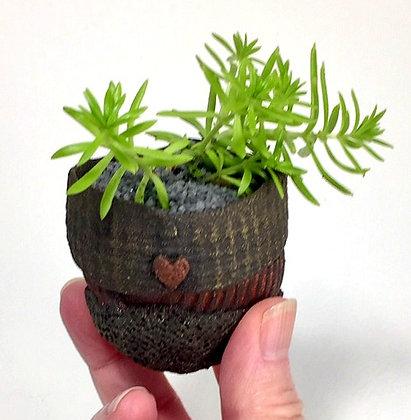 Share your Heart Tiny Planter1