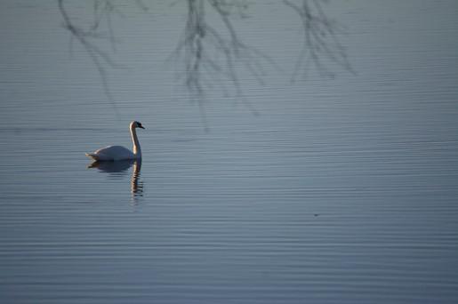 Loimovuoriphotography-nature-minimalism-