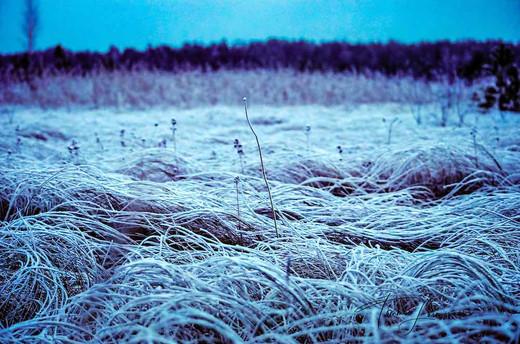Loimovuori Photography-frost swamp.jpg