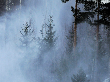 Loimovuori photography-nature-smug-trees