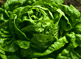 Fighting Alzheimer's with Green Veggies