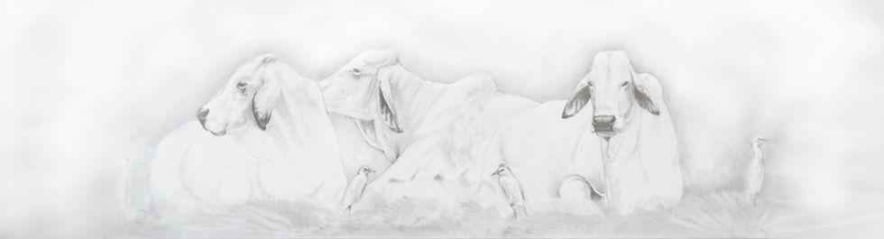 White_BULL_Illustration_edited.jpg