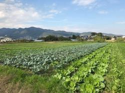 青井農園1