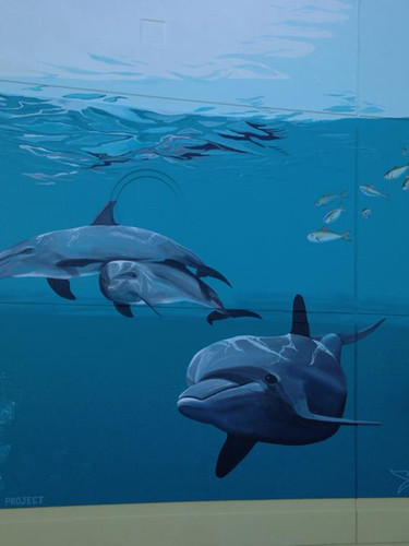 Dolphins Mural located at Jupiter Point Marina and the Palm Beach Dolphin Project