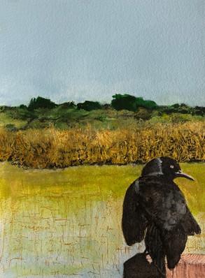 Bird: Savannas Preserve
