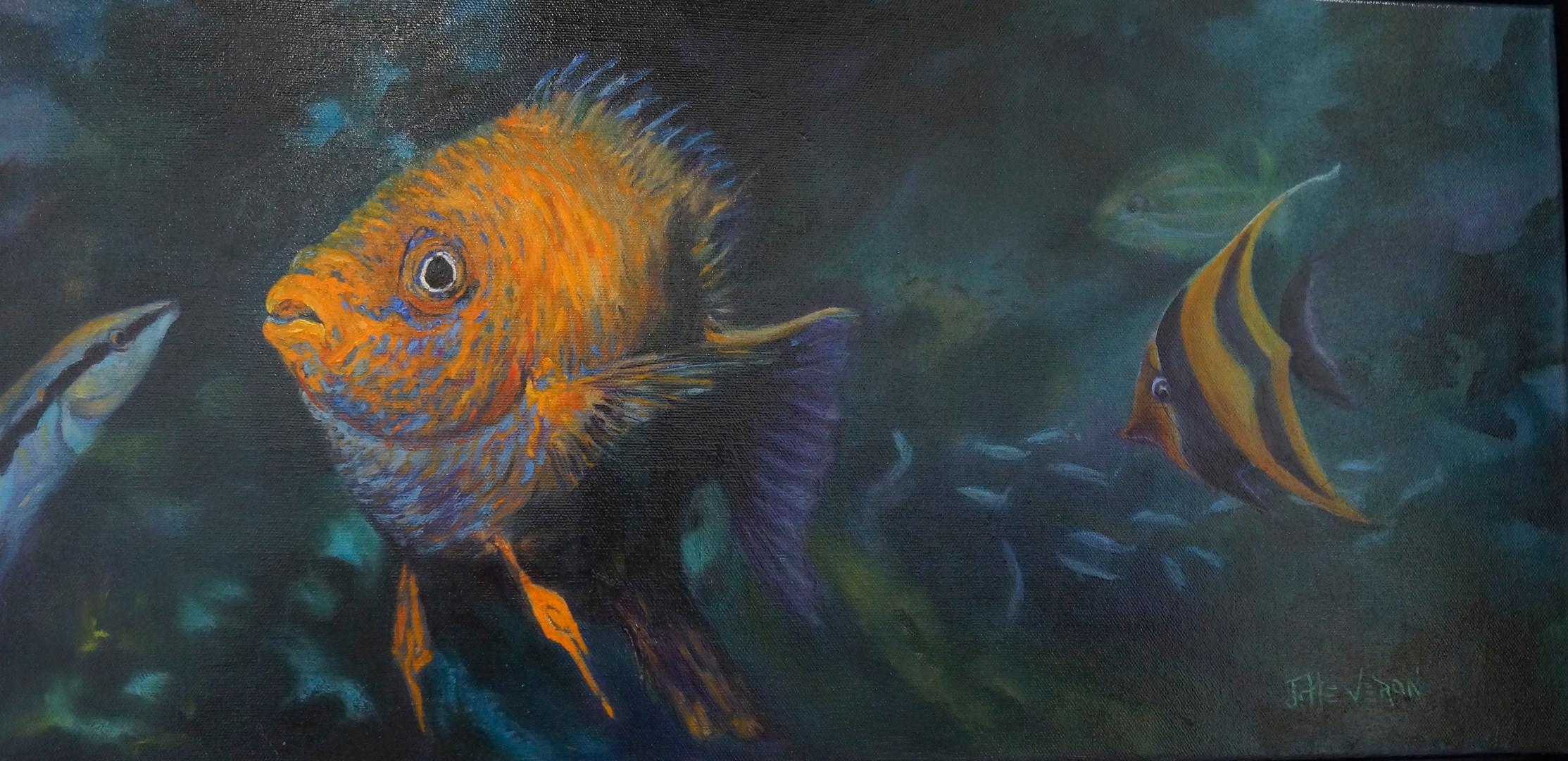 Golden Damsel Fish