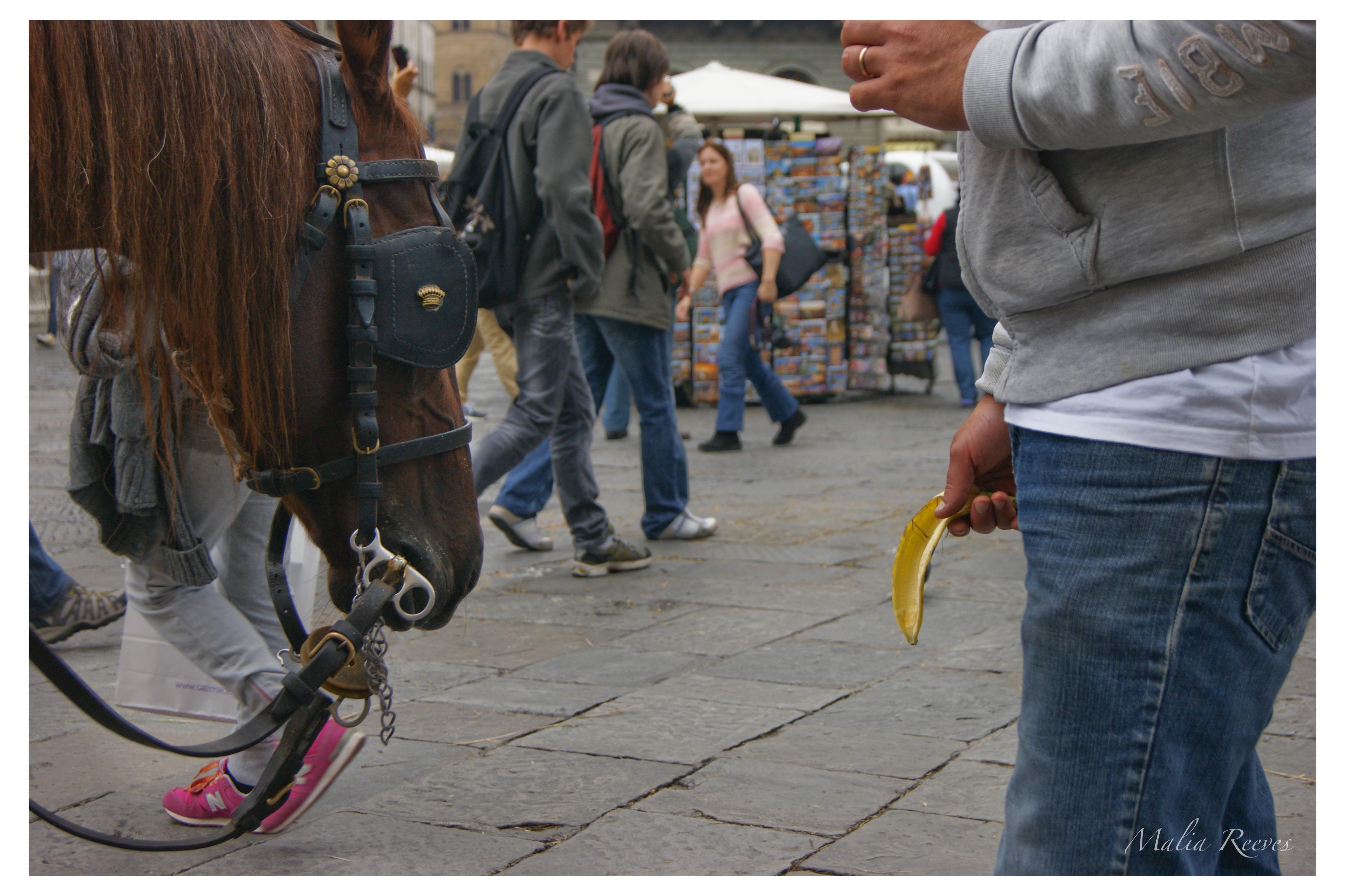 Horse vs Banana