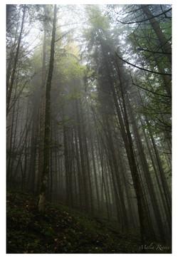 Vertical Mist