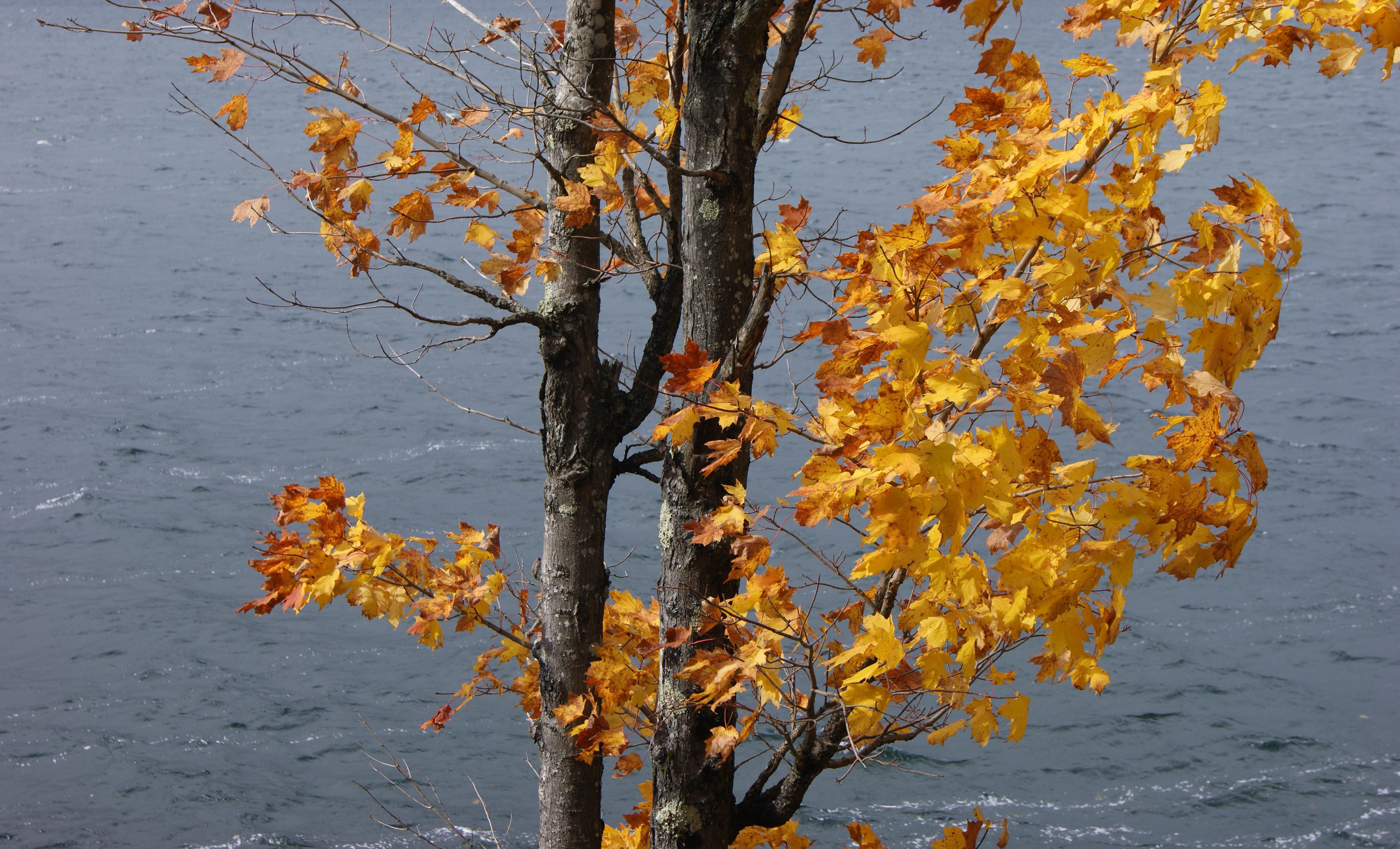 Lake-1.jpg