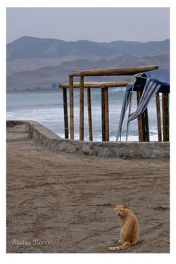 Lonely Gato