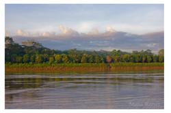 Amazonian Tree Farm