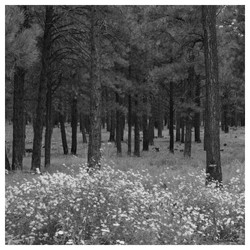 Poderosa Forest