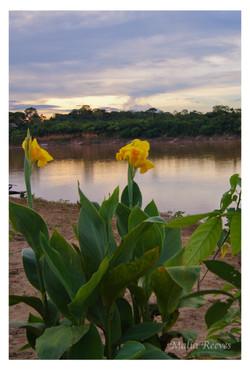 Amazon Blooms