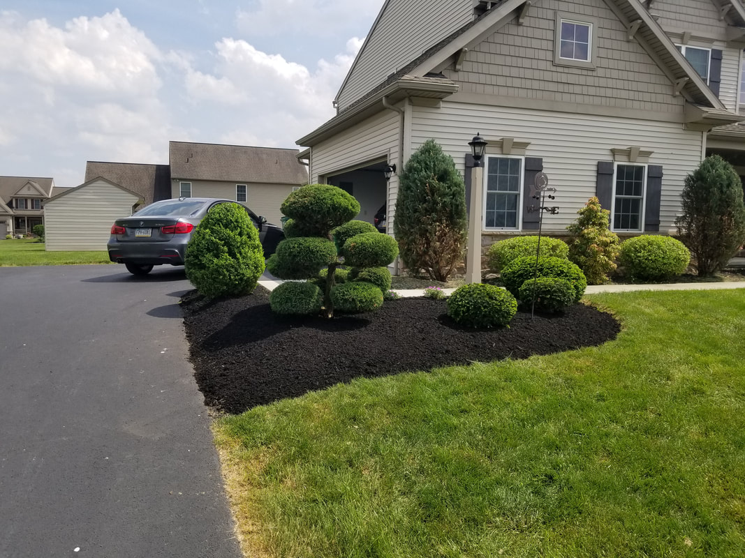 Shrubs that have been trimmed.