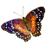 butterfly-png-multicolour.png