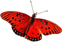 Best_butterfly-png-one.png
